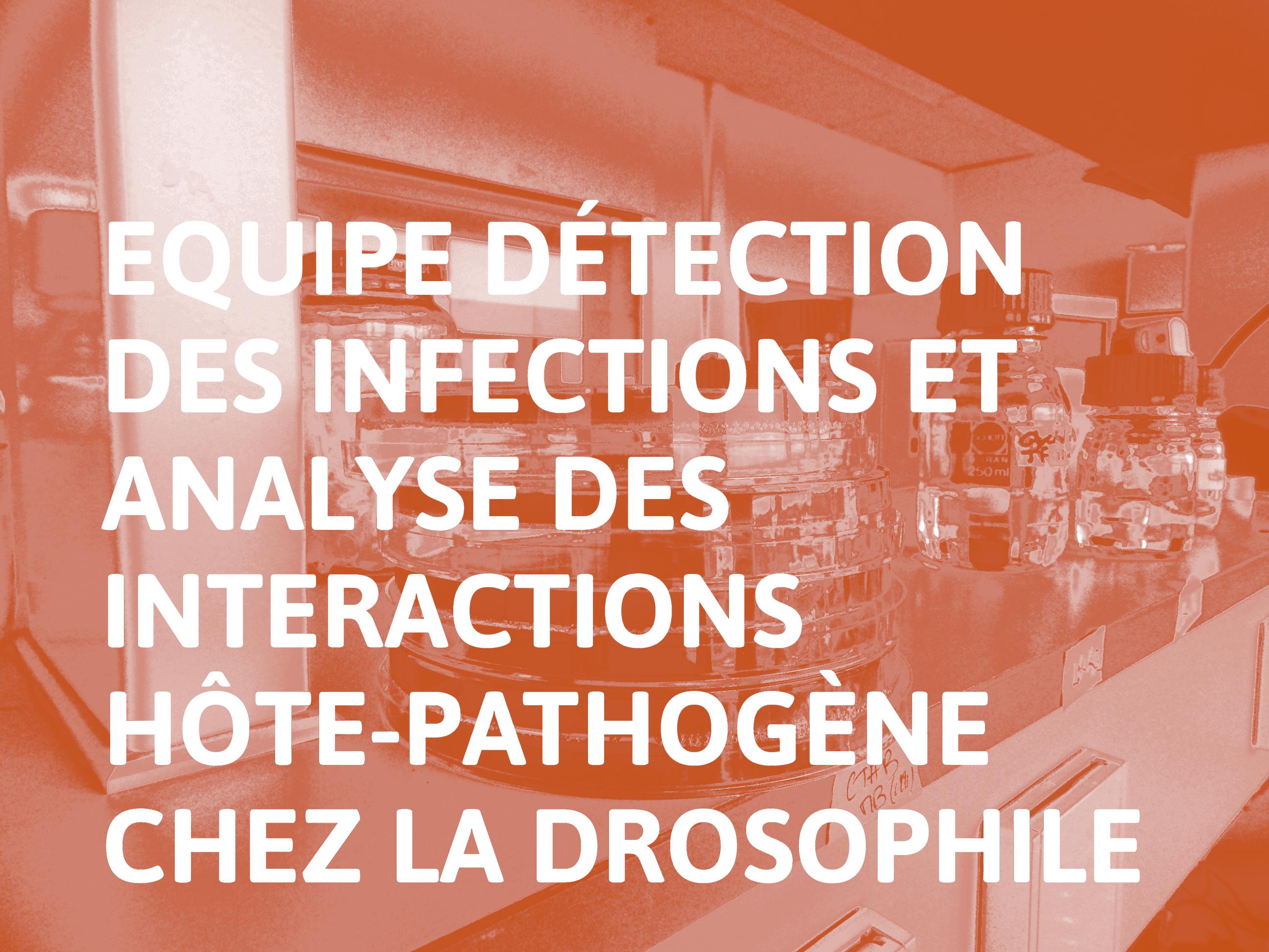 Equipe_Détection_des_infections_et_analyse_des_interactions_hôte-pathogène_chez_la_Drosophile