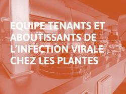 Equipe_Tenants_et_aboutissants_de_l'infection_virale_chez_les_plantes