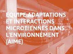 Adaptations et Interactions Microbiennes dans l'Environnement (AIME)