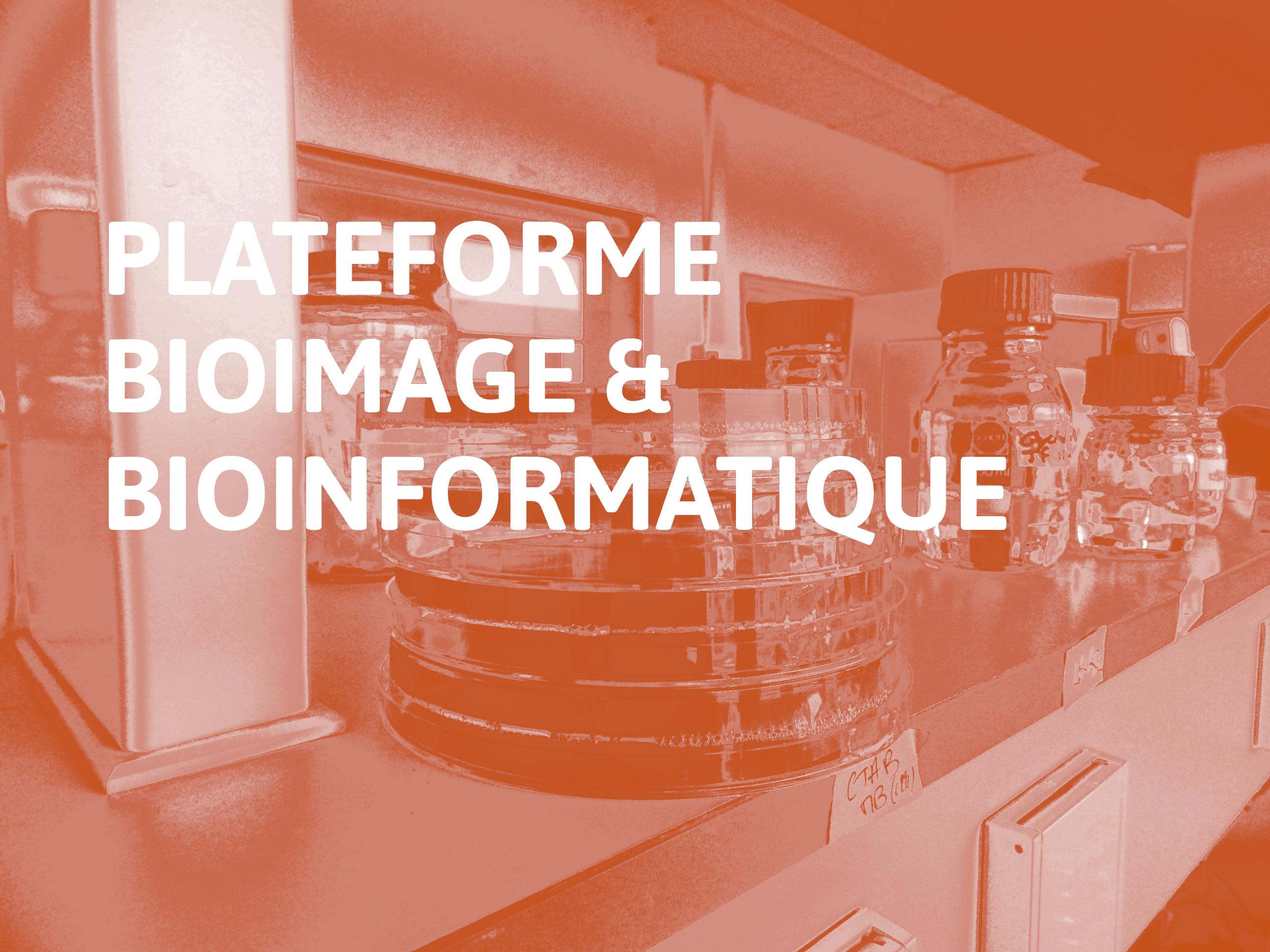 Plateforme Bioimage & Bioinformatique