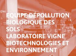 Equipe_Dépollution_Biologique_des_Sols_-_Laboratoire_Vigne_Biotechnologies_et_Environnement