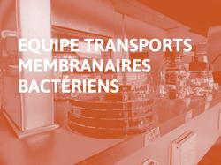 Equipe_Transports_Membranaires_Bactériens