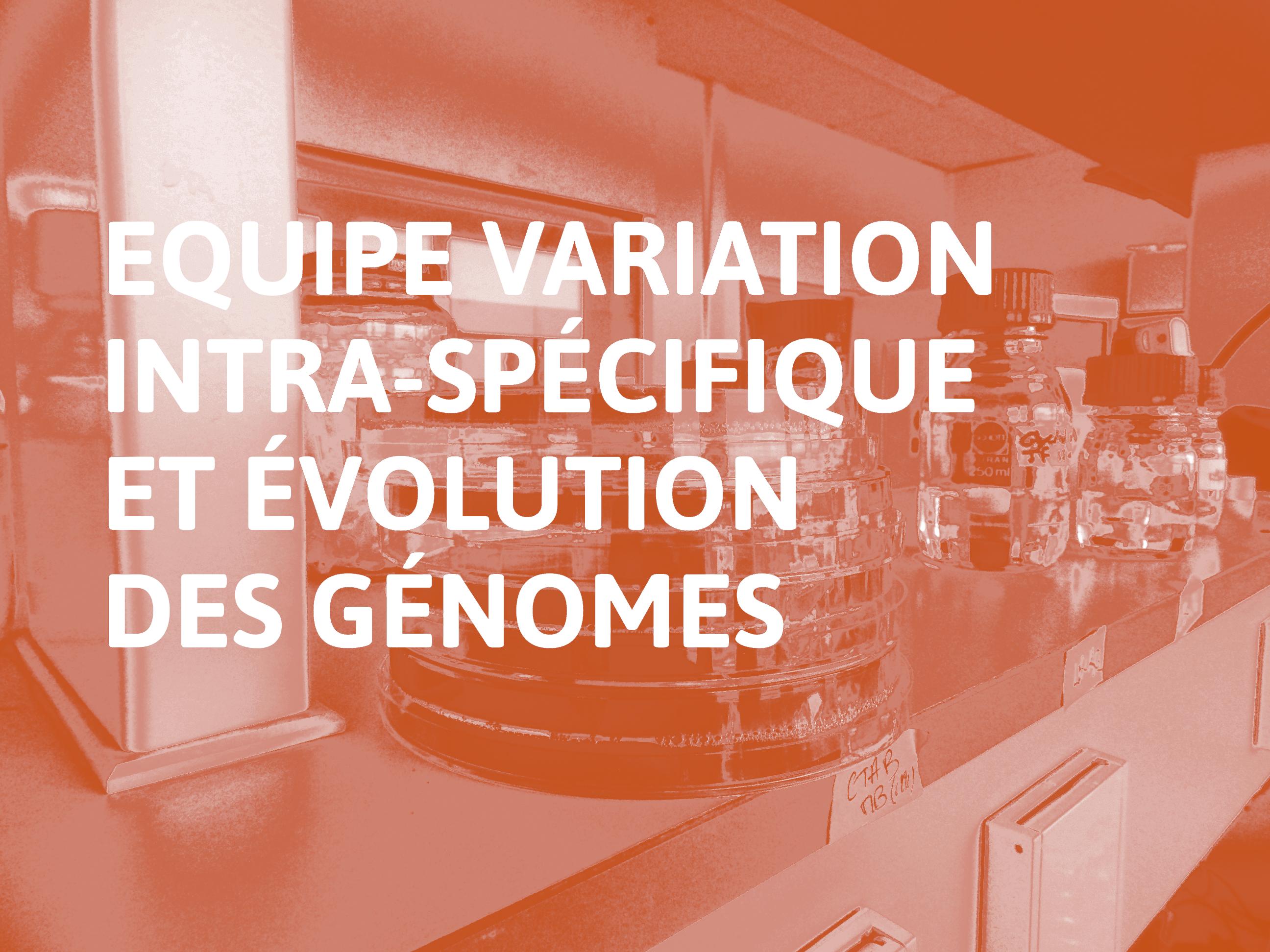 Equipe_Variation_intra-spécifique_et_évolution_des_génomes