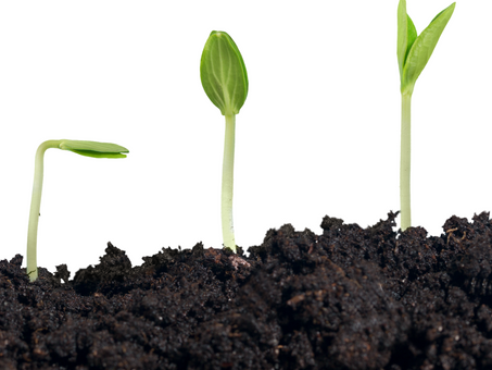 Obsess over lost leads if you want to grow