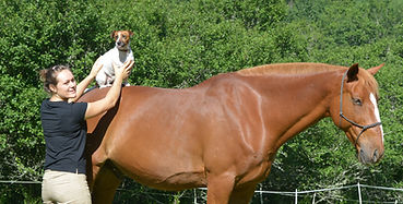 Cheval, Chien, Rééducation, massage, stretching, physiothérapie manuelle, Canin, Equin, Harmony Animal Physio