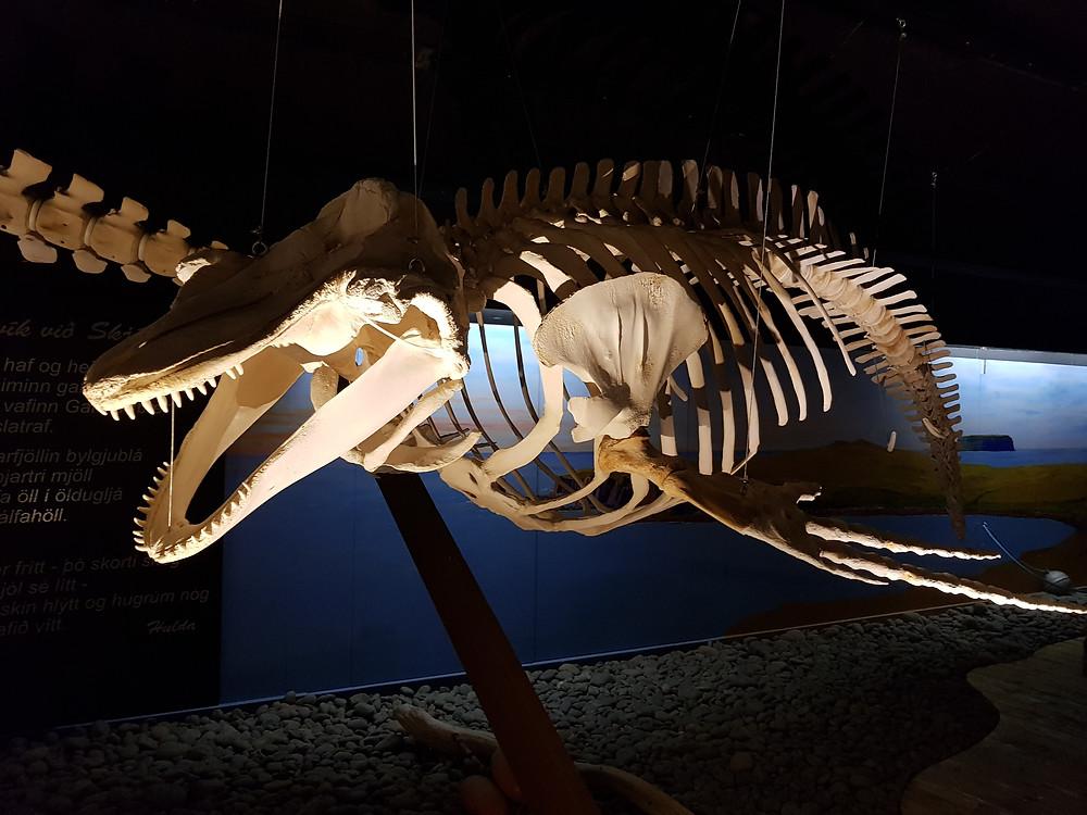 HUSAVIK islande musée de la baleine