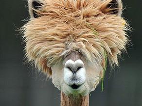 Having a bad hair day?