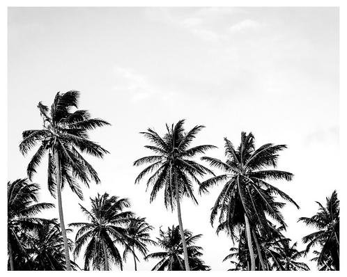 Box Framed Print - Palms