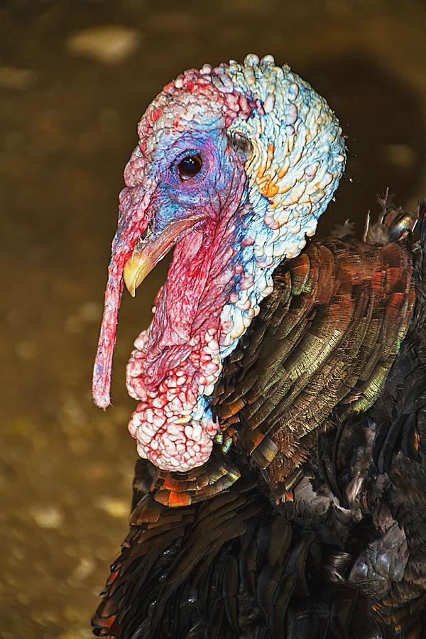 beautifully-ugly-turkey-bob-slitzan.jpg