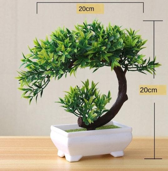 Roślinki jak żywe Bonsai
