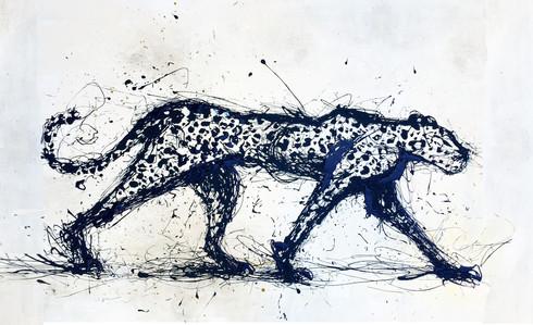 Leopardus azul 2016