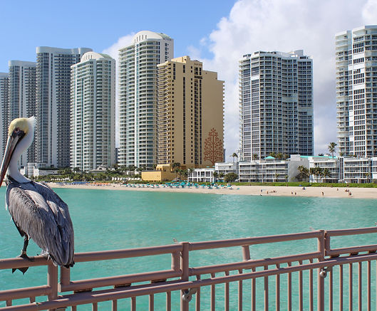 Sunny Isles Beach pelican on pier.jpg
