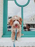 Pup Blue.jpg