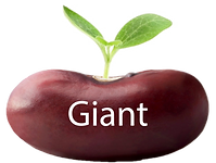 Giant button copy.png