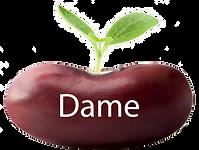 Dame button copy.png