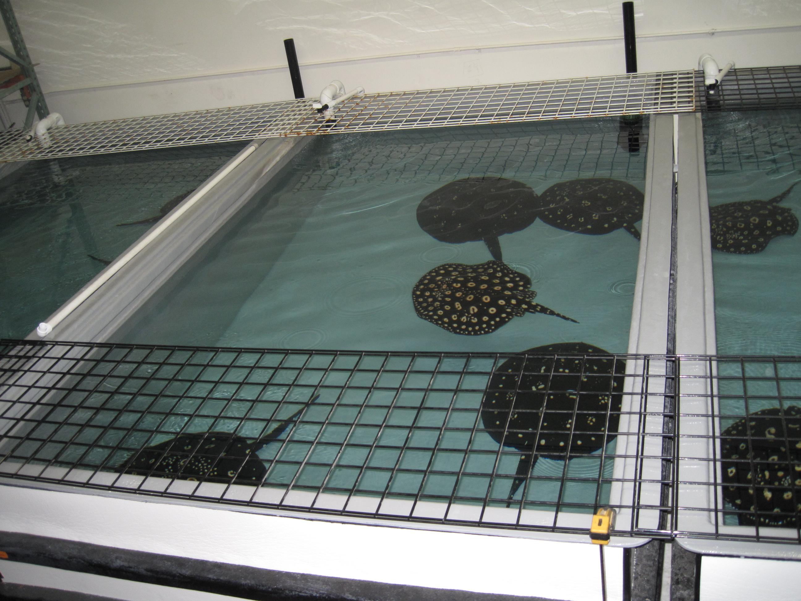 Center for Stingray biology breeding facility