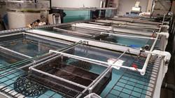Stingray breeding facility