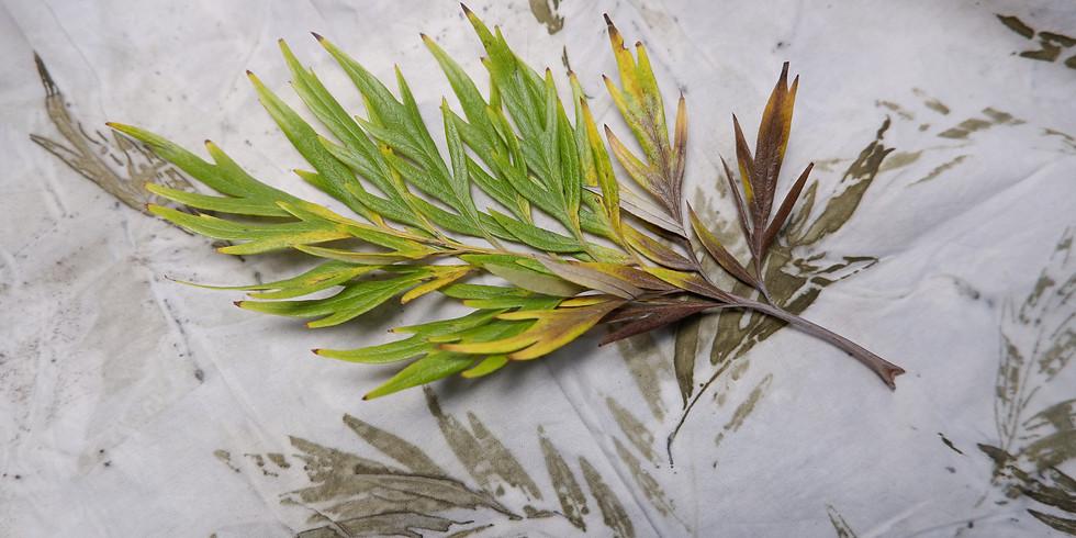 Impressão Botânica   // 40€