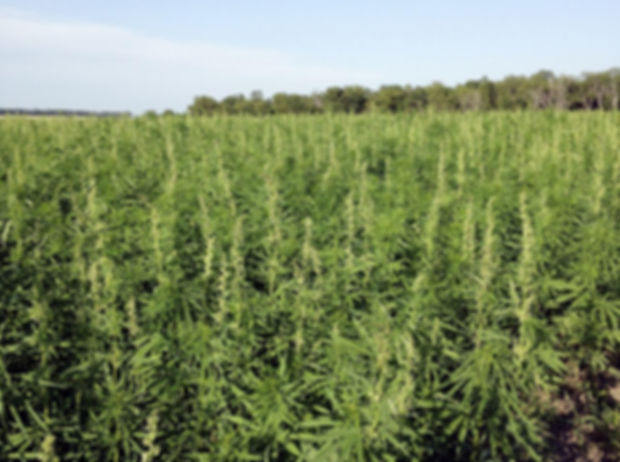 6-19 growers, hemp advocates waiting for