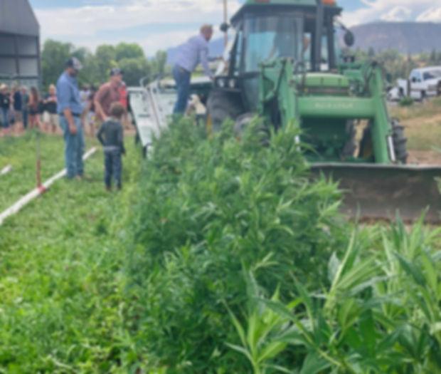 7-18 hemp grows more popular in area.jpg