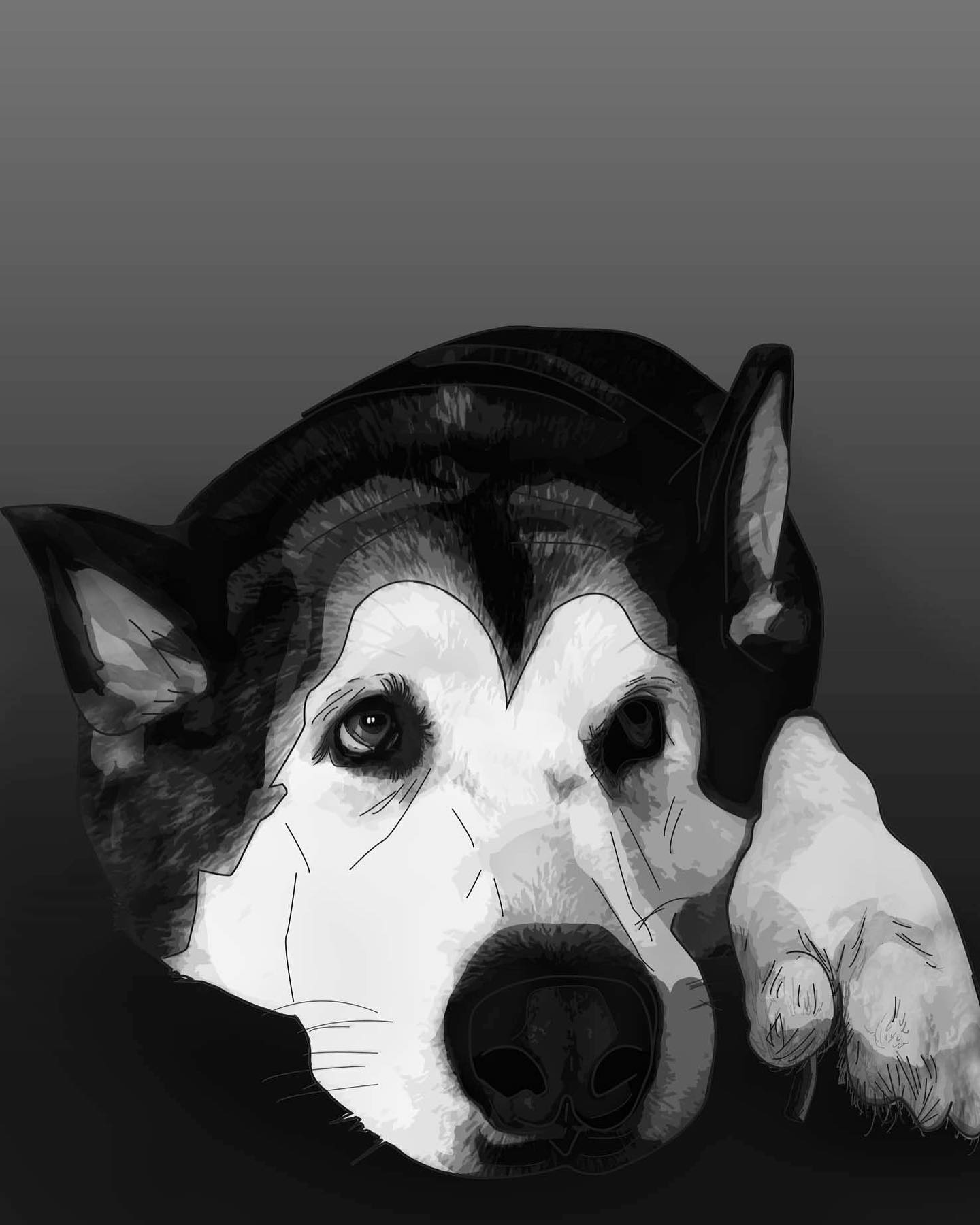 Dog fully shaded.