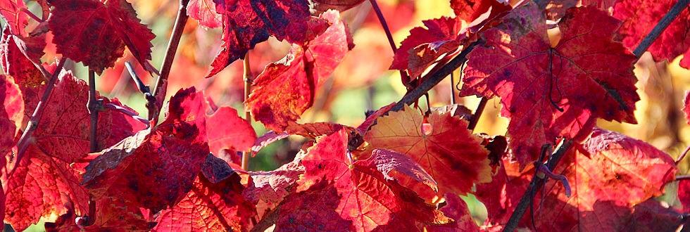 automn leaves...