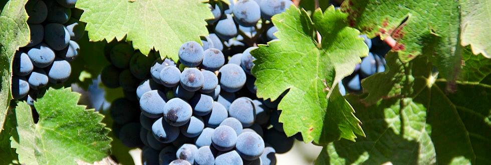 healthy berries.