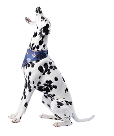 DOG FREINDLY FILEY