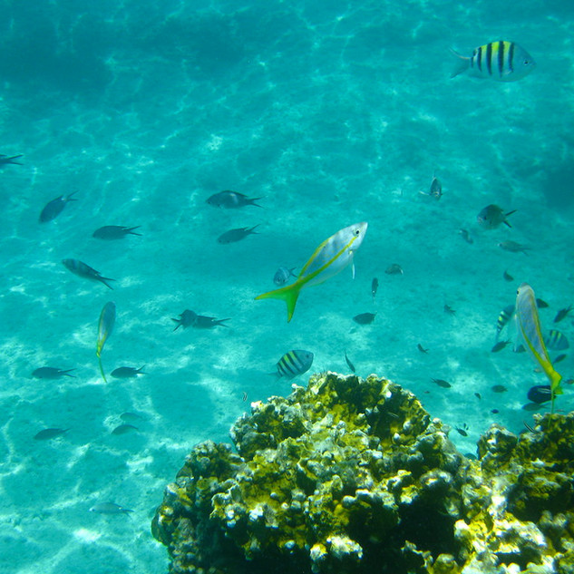 Snorkeling in the Berry Islands Bahamas