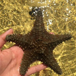 Starfish on Great Harbour Cay Bahamas
