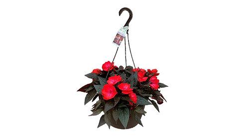 "10"" Hanging Basket - New Guinea Impatiens"