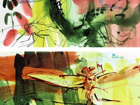 Emperor Dragonfly 9