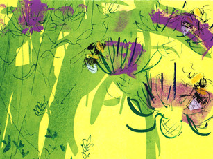 White-tailed bumblebee and knapweed 10