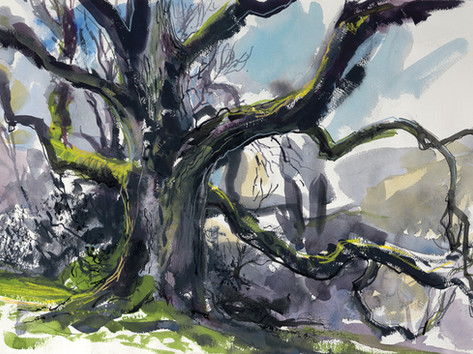 Granham Oak (Spring)
