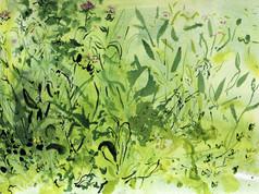 Trymwood meadow 1