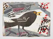 Blackbird & Redwing on Rowan