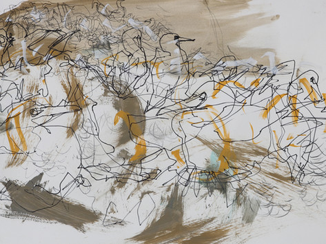 Colony 5 - Gannets, Bass rock