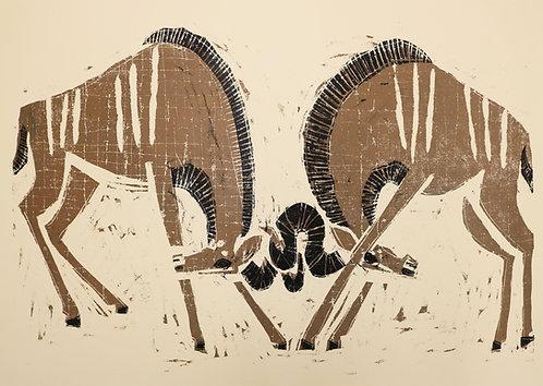 Fighting Kudu