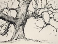 Granham Oak