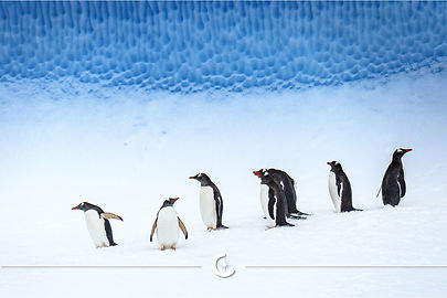 Antarctica-7.jpeg