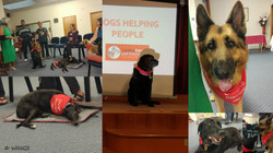 Dogs helping people - WINGS meeting theme