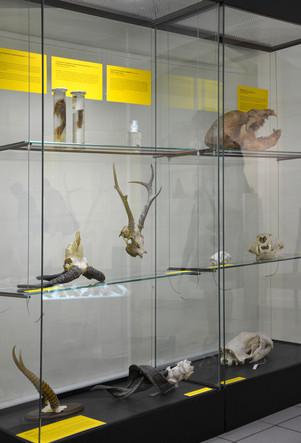Выставка Дарвиновский (4).JPG