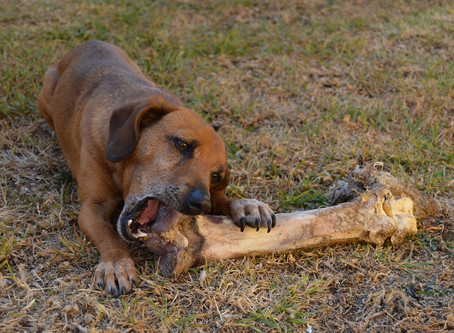 Bones? Be Safe, Not Sorry