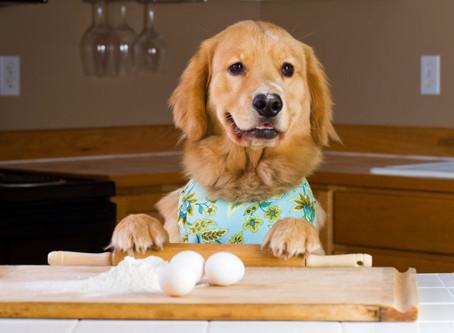 Quick! Improve Your Dog's & Cat's Meals