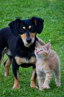 My 5 Ways to Protect Your Animal from Coronavirus