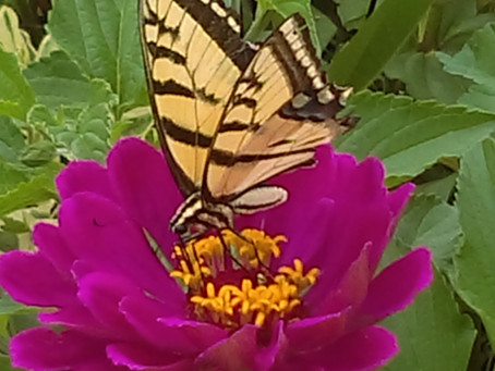 You Save Pollinators When You...