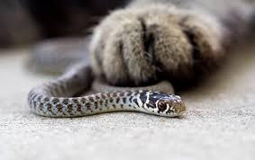 Snake Bite???