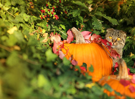What Do Your Animals Feel About Halloween?
