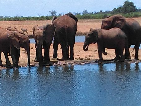 Elephants Singing to Mother Earth. Why?