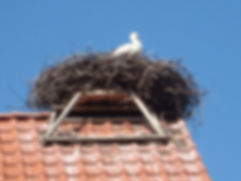 Rühstädt Storchendorf Ferienhaus-Abbendorf.de Prignitz